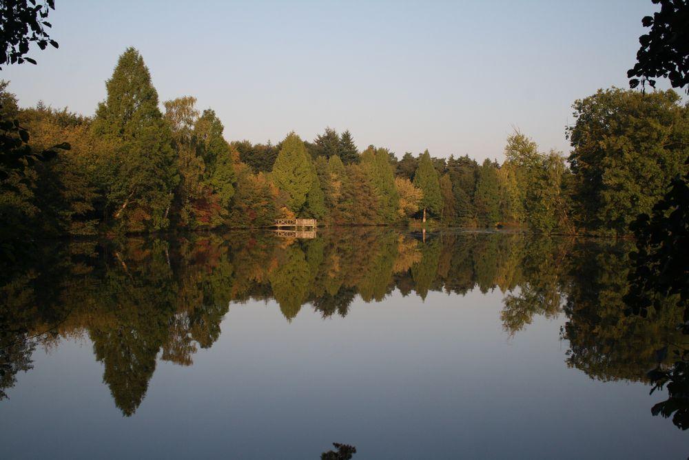 Wässeriger Herbstwald von Sebastian Gierse