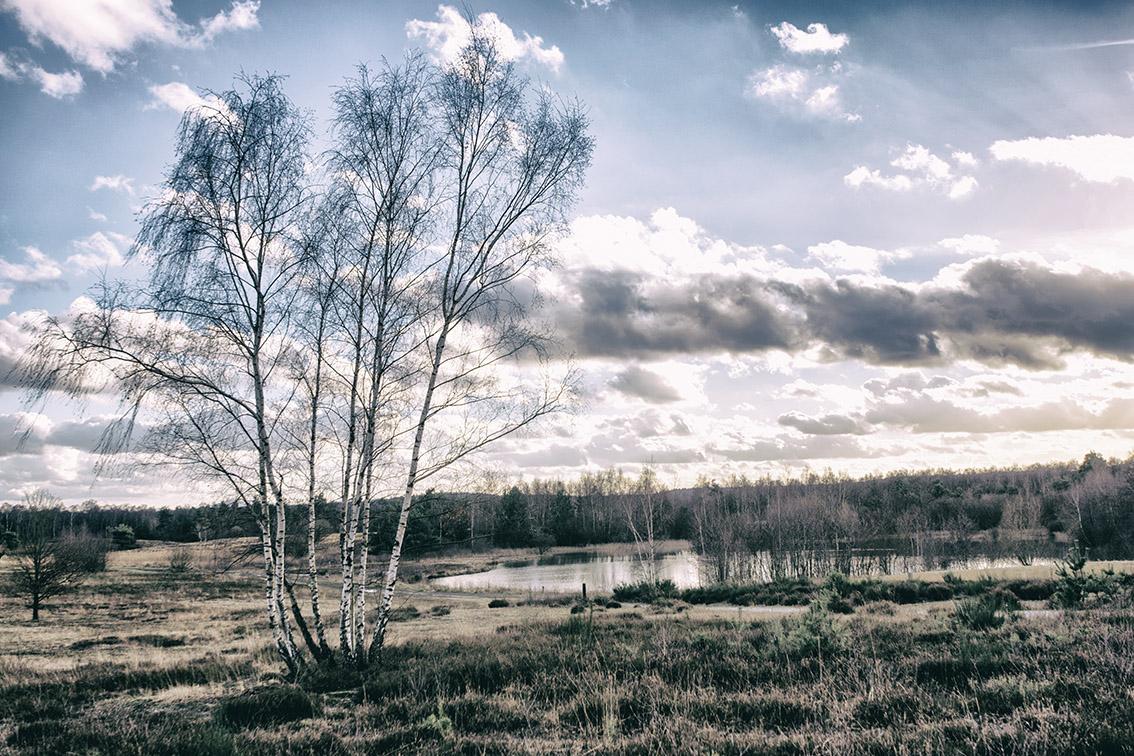 Wahner Heide 01