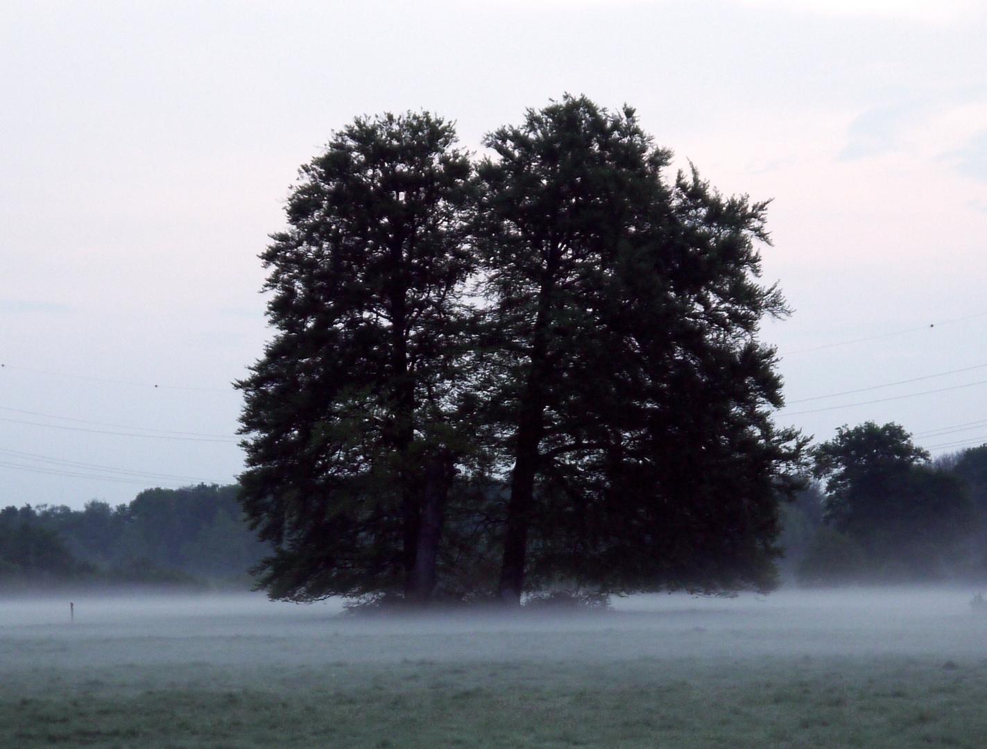 Wahner Heide 9