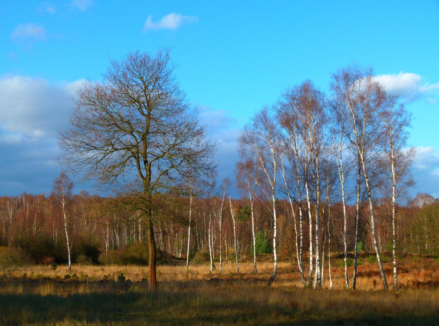 Wahner-Heide