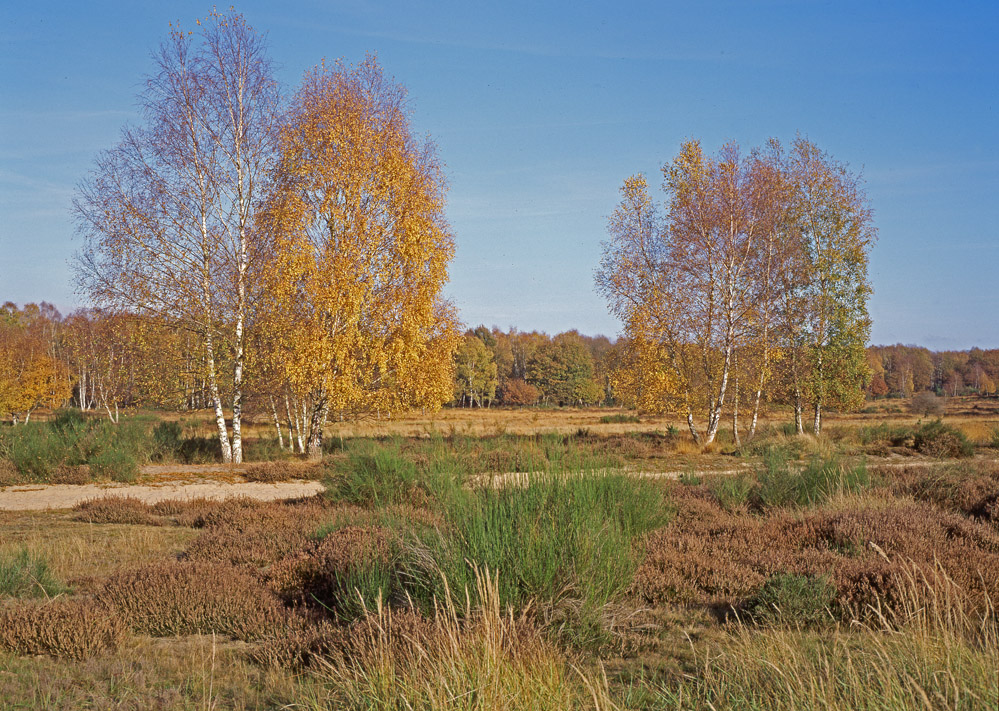 Wahner Heide Herbst (2)