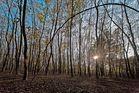 Wahner Heide im Herbst 2 (Köln)