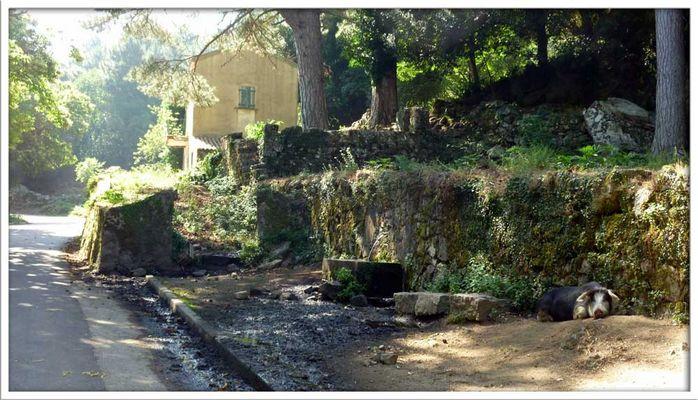 wahrscheinlich guckt wieder keine Sau - auch nicht in Korsika