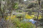 Waimangu Valley Neuseeland