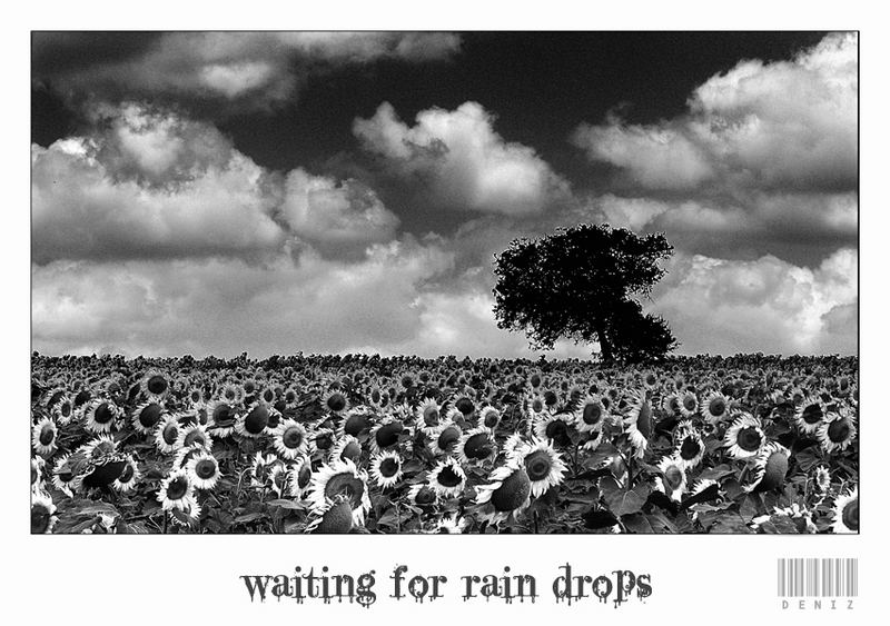 waiting for rain drops...