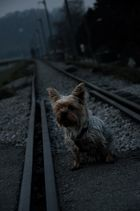 Waiting for the train...