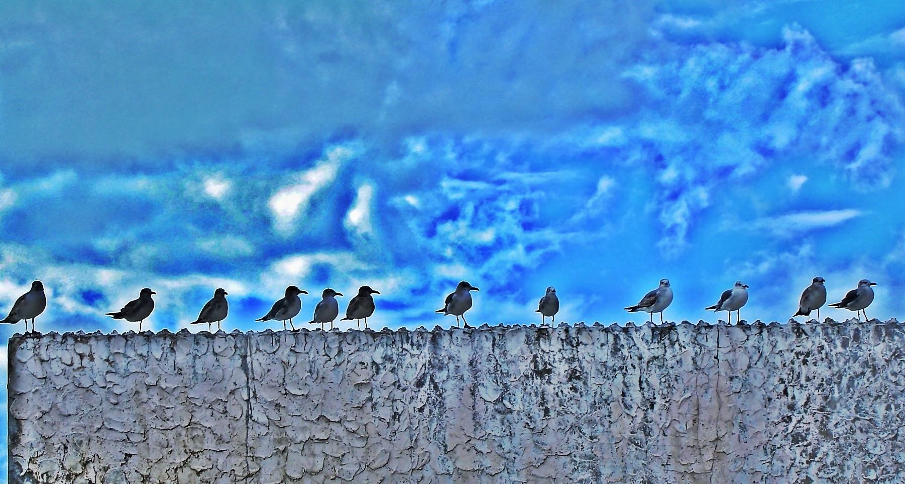 Waiting Seagulls