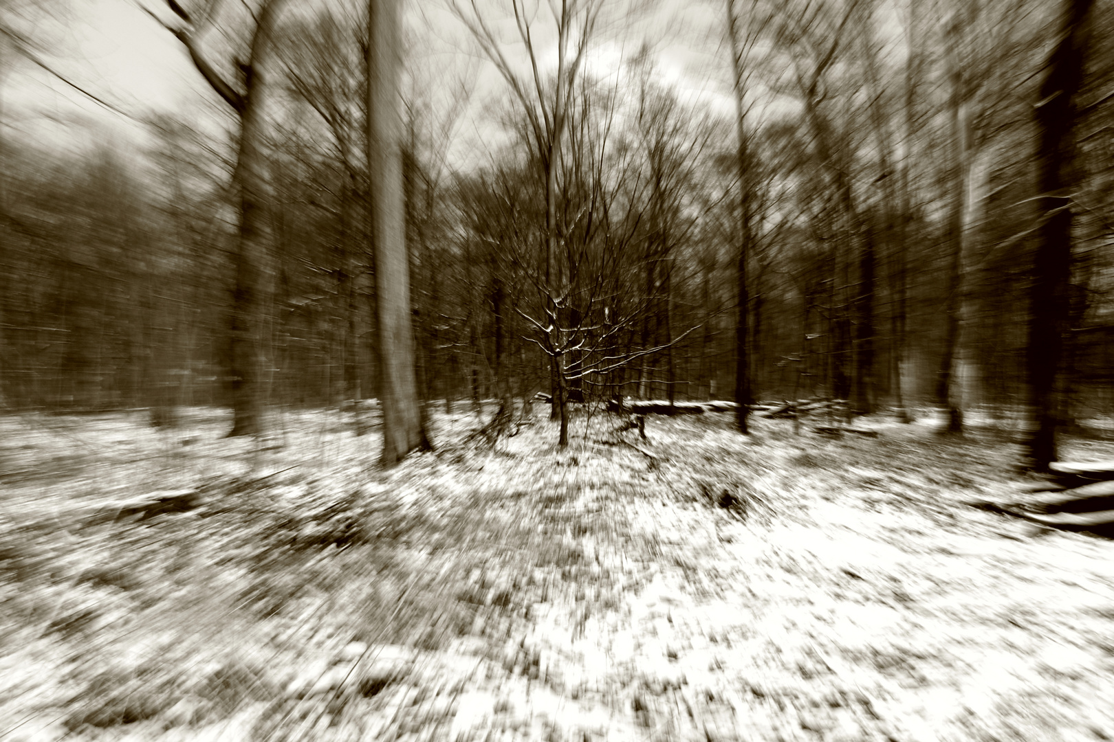 Wald 001