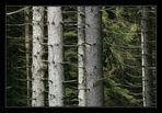 Wald # 1 (6664)