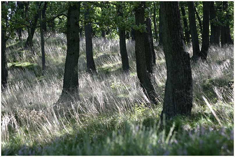 Wald #2 (6738)
