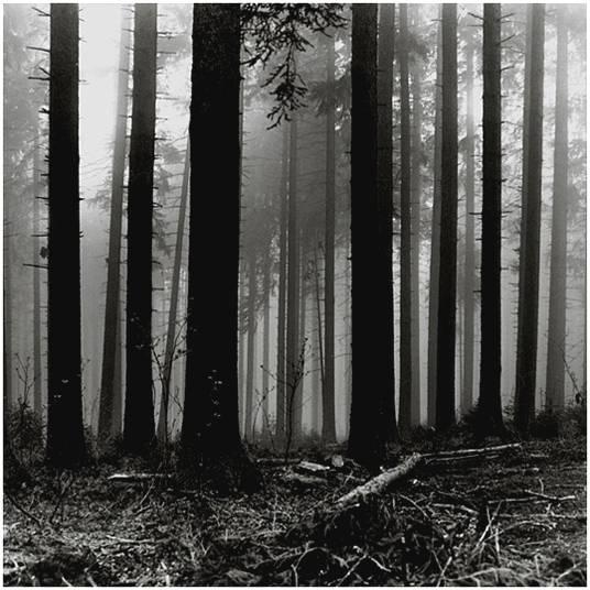 Wald 2