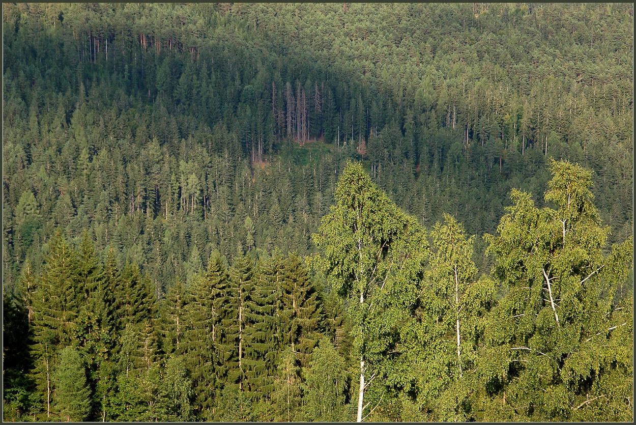 Wald...