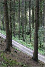 Wald # 3 (8802)