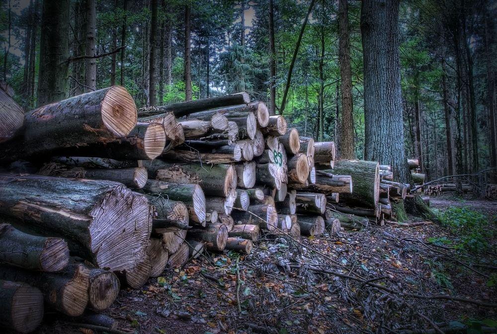 - Wald -