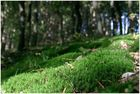 Wald # 4 (8807)