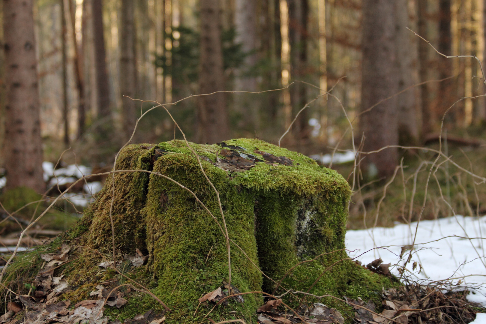 ...Wald