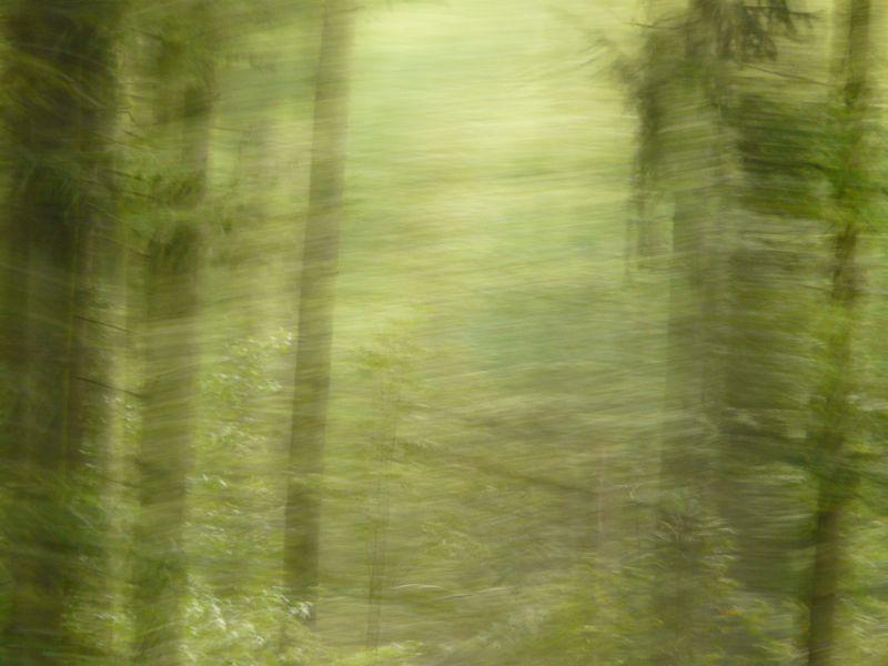 Wald 52
