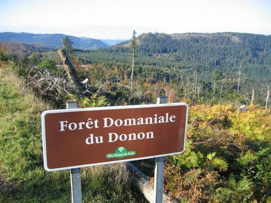Wald ?