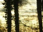 Wald 61