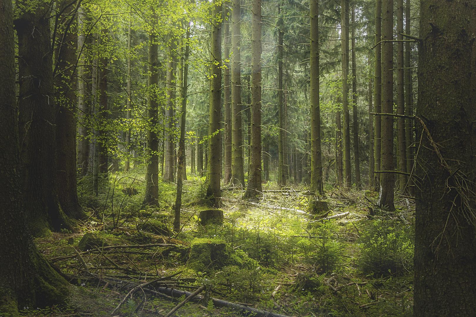 Wald***