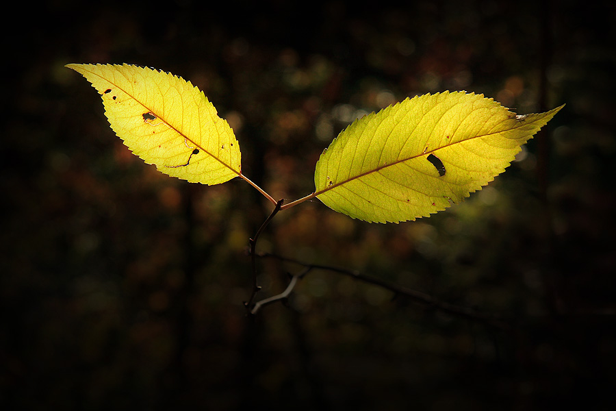 Wald - A L I E N