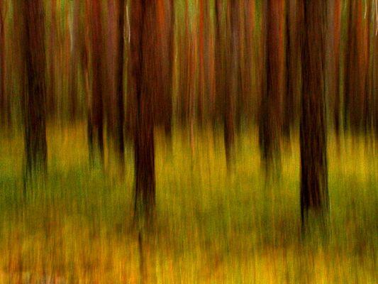 Wald abstrakt