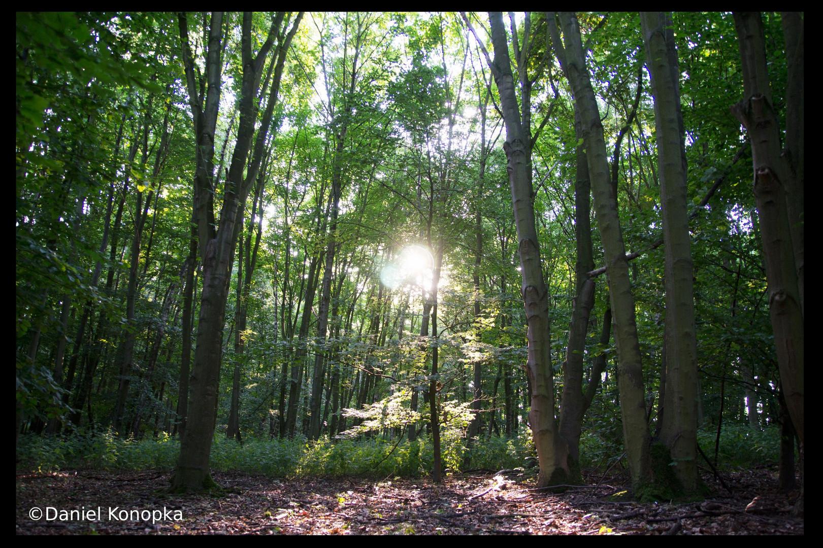 Wald am Abend