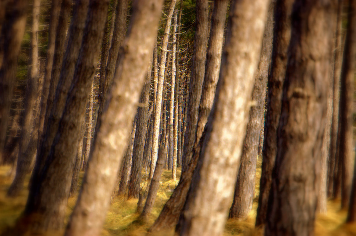 Wald am Gellen