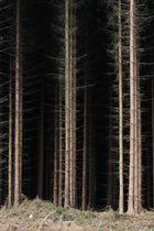 Wald am Möhnesee