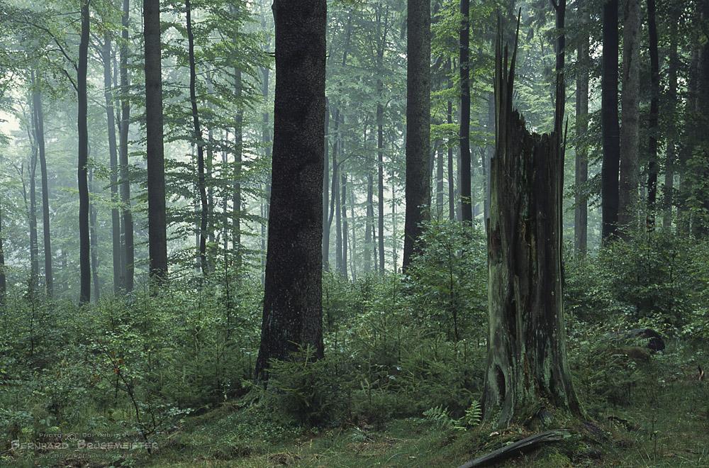 Wald am Rothaarsteig