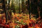 Wald auf Bodenebene