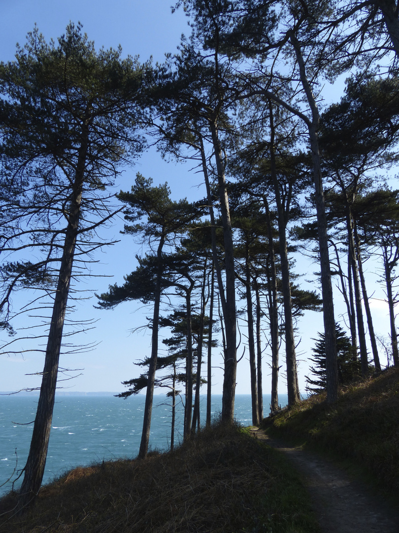 Wald auf den Klippen