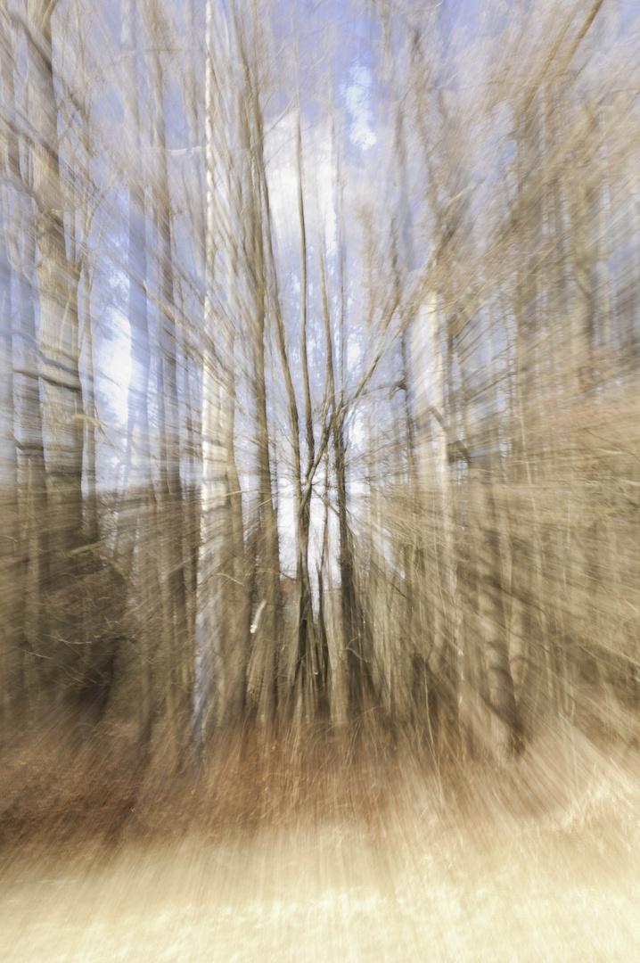 Wald aus der Sicht einer Fliege, welche auf der Flucht vor einem Vogel ist...