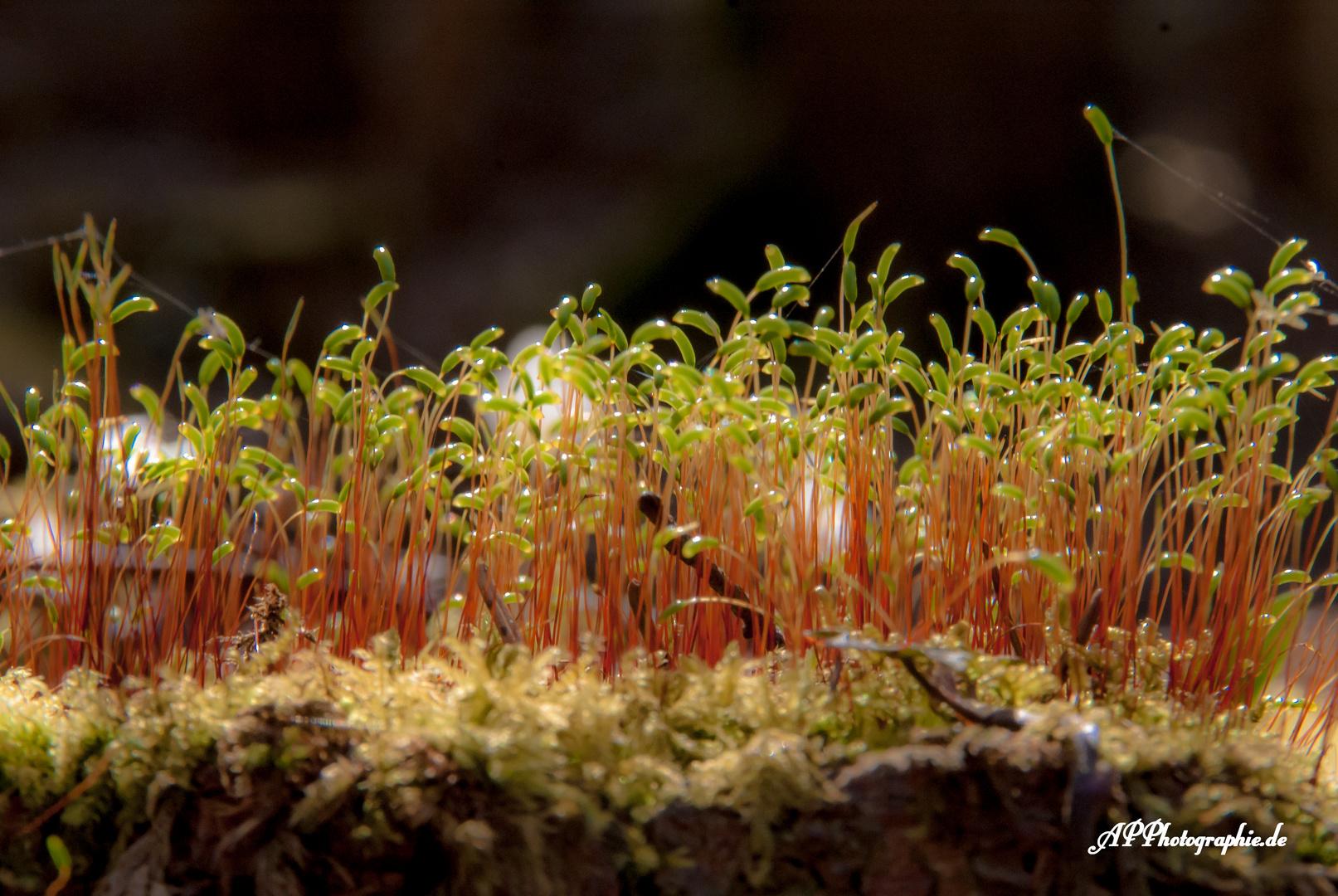 Wald aus Moos