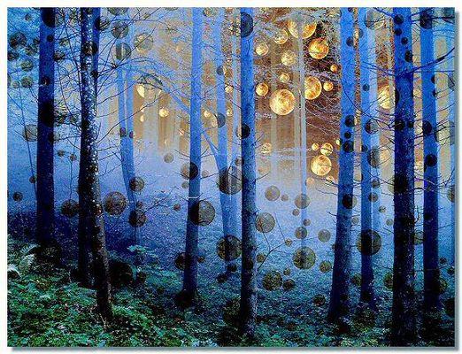 Wald ausserirdisch