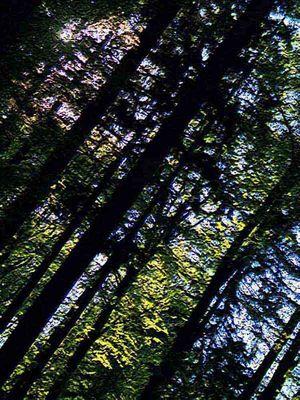 Wald - Baumstämme