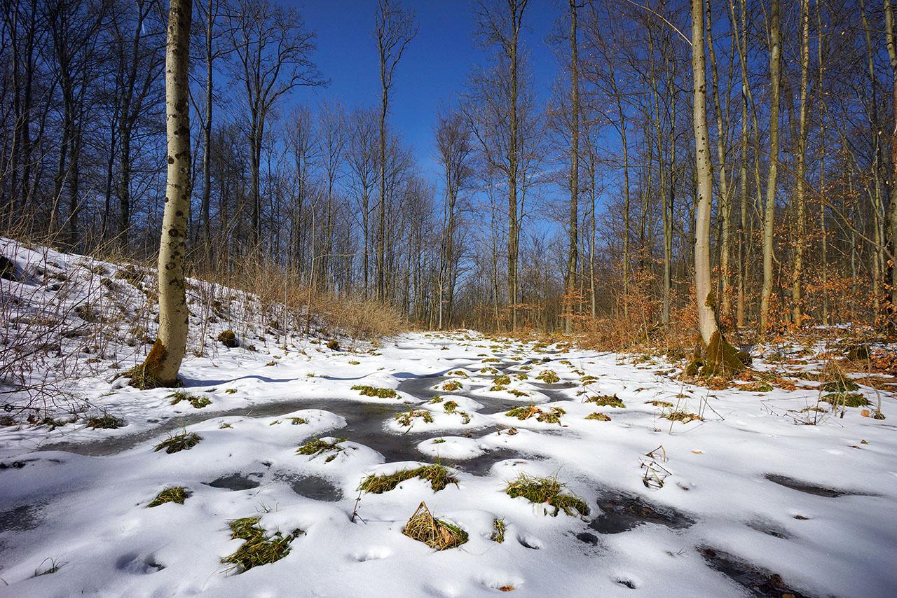 Wald bei Auersburg