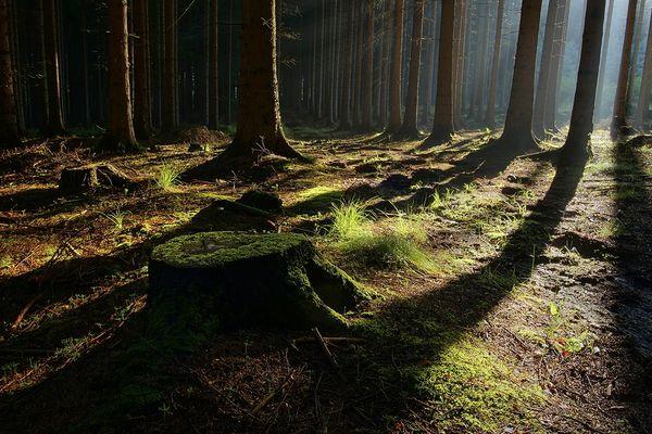 Wald bei Frydlant