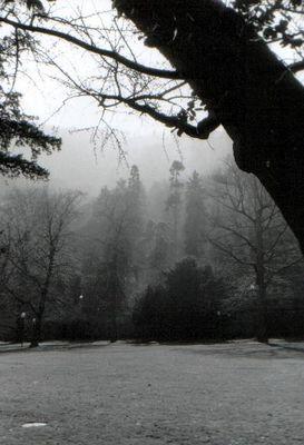 Wald bei Heidelberg