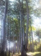 Wald bei Heiligendamm