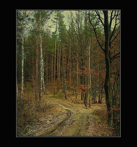 Wald bei Kokorin