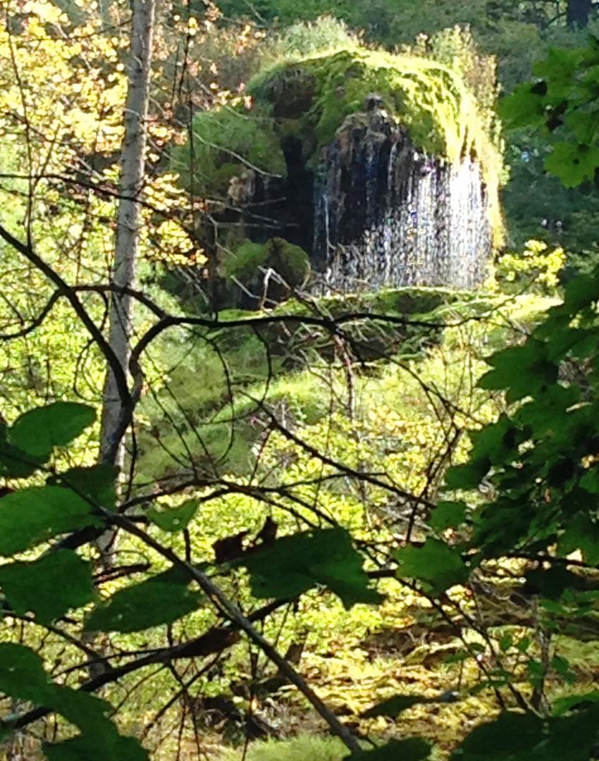 Wald bei Kollbrunn (Winterthur)