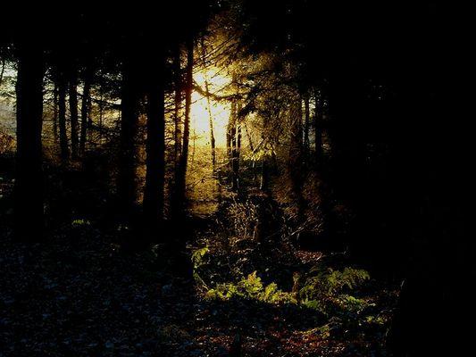 Wald bei Sonnenuntergang