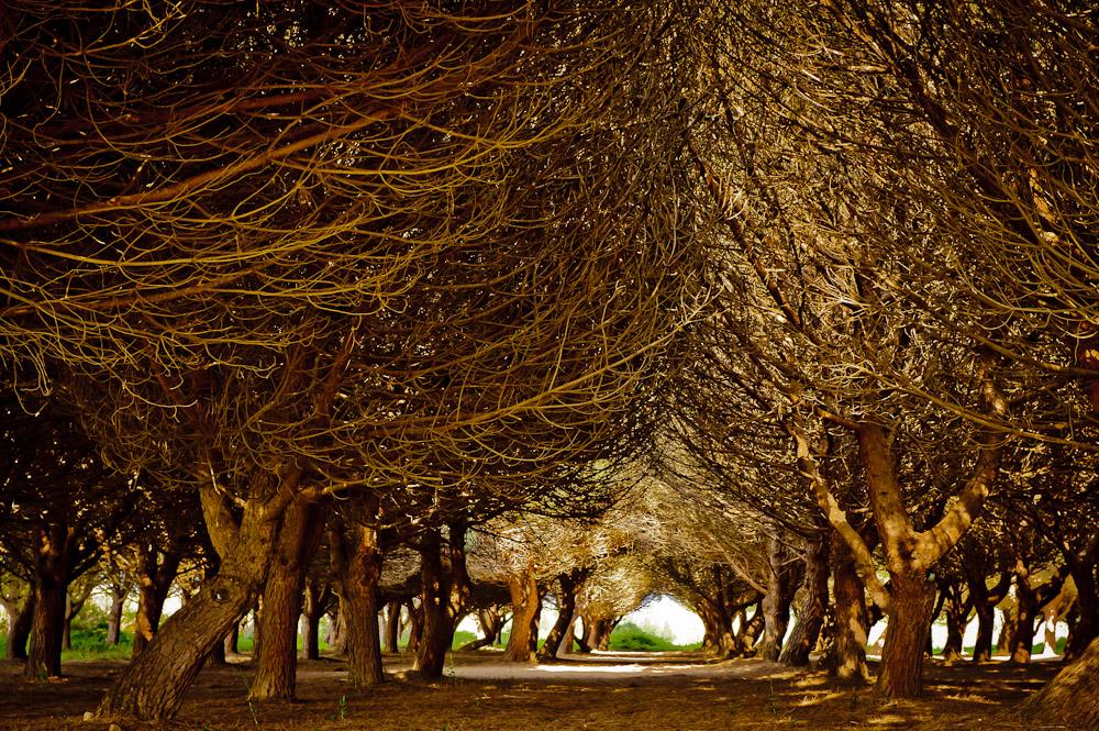 Wald bei St. Tropez