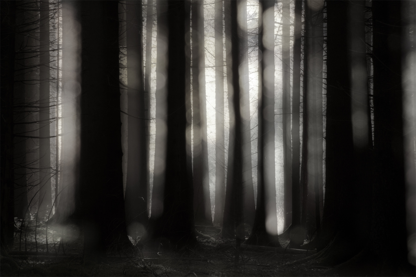 Wald berührt Traum