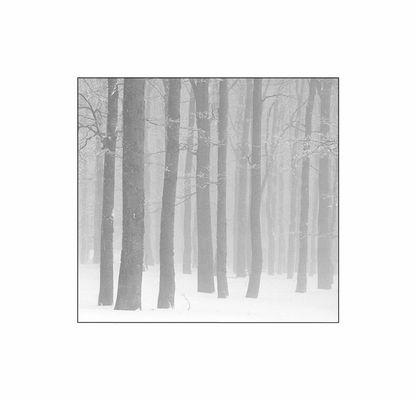 Wald-Bilder 2