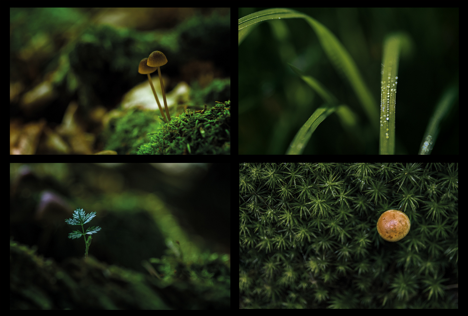 Wald Collage