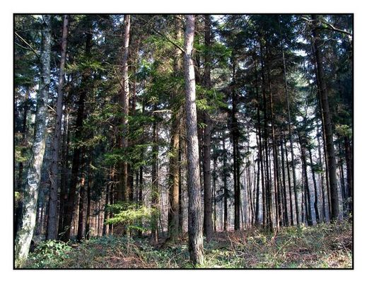 Wald (De00041)