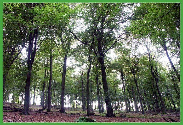 Wald - dem Licht entgegen