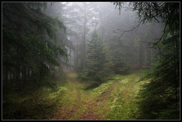 Wald der Feen #1